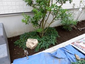 庭石に合わせたグランドカバー植栽