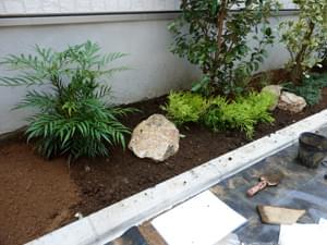 マホニアコンフューサを植栽