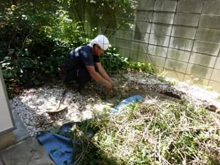 植物の撤去作業
