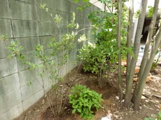 落葉低木の植栽