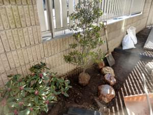 花壇の中へ植木を植栽