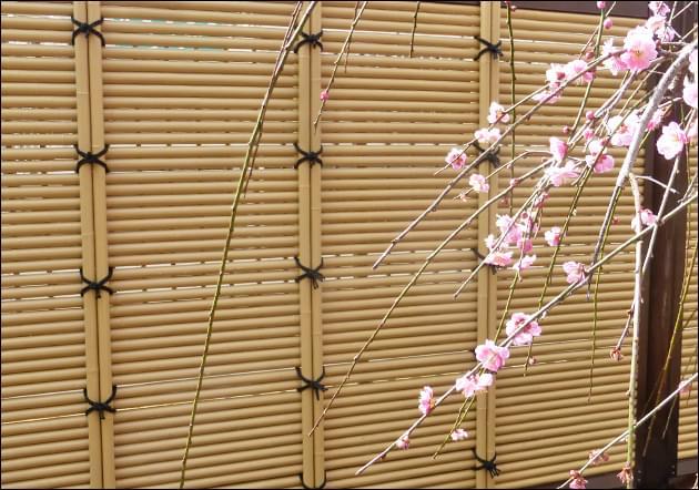 枝垂れ梅との引き立ち合い