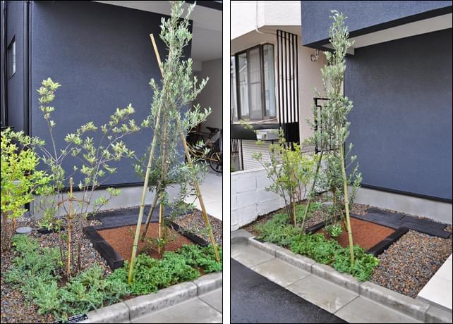 シンボルツリーと小さな花壇の庭