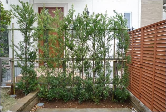 ラカンマキの緑で自然に目隠しされた隣家玄関