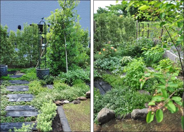 ヤマモモやジューンベリーで実成りを楽しむお庭