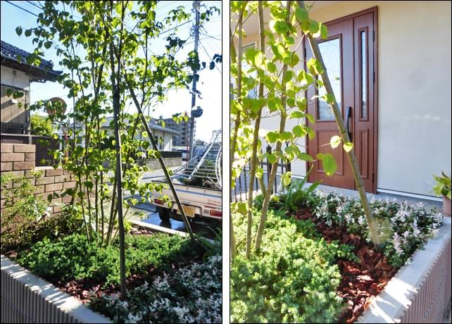 花壇にはシンボルツリーを添えて小庭としてデザイン