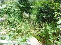 雑草対策前の専用庭