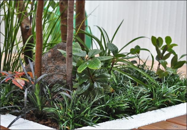 下草類の自生をイメージさせる植栽レイアウトを