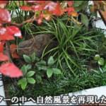プランターの中へ自然風景を再現した植栽群を-世田谷区H様邸
