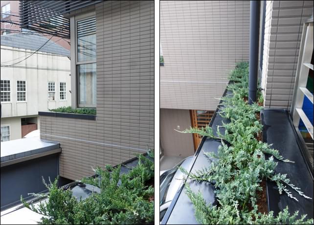 2階窓辺に面したプラントスペースへの植栽状況