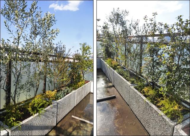 青空の下、活き活きとした雰囲気を出す植栽群