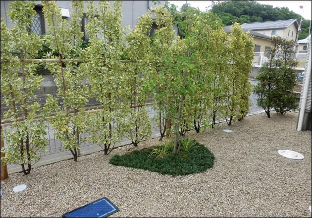 キンマサキの植栽とジューンベリーの植栽