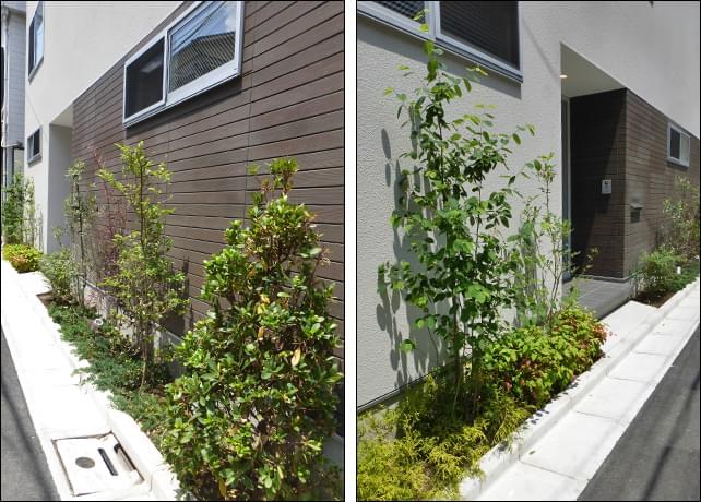 ウッド調とホワイト調の外壁に映える植栽の緑