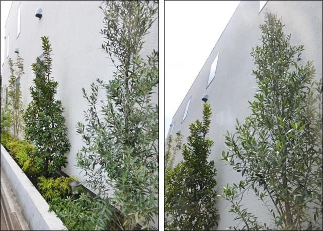 グランドカバーの植木による多彩な色合い