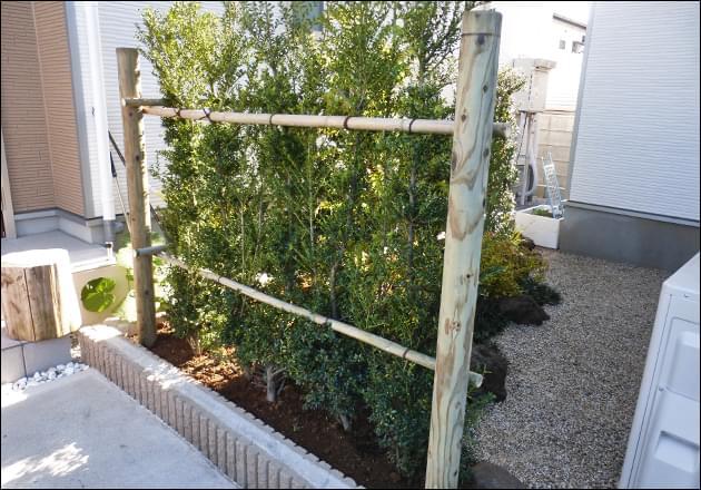 庭の外から眺めるキンメツゲの生垣