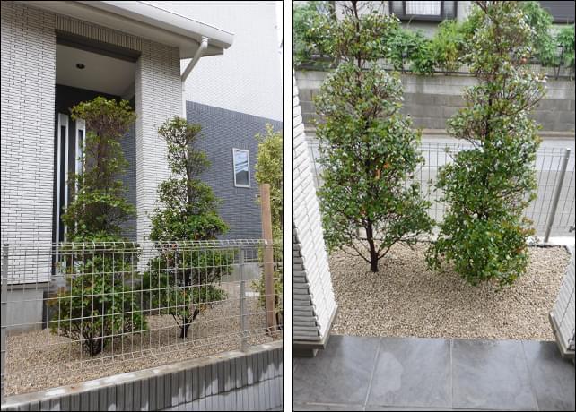 玄関前の隙間を目隠しするヒメシャリンバイの植栽