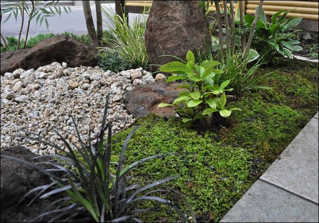 苔庭に生える小さな下草が自然味を