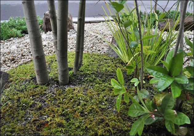 坪庭の中で植栽同士が生み出す引き立てあい