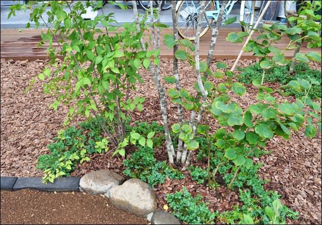 雑木同士を混生させ、野趣ある庭に