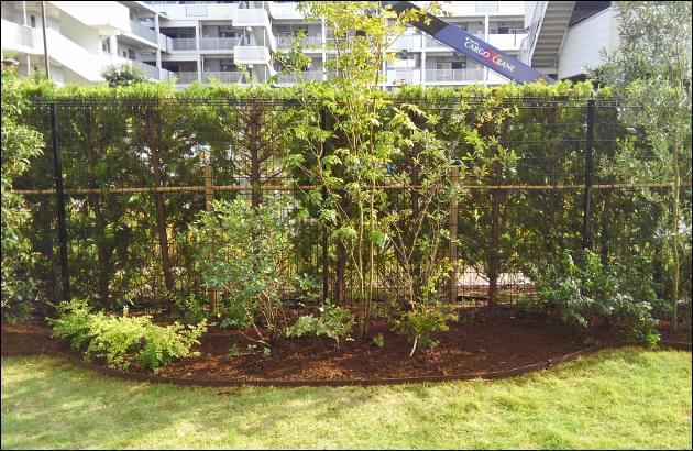 アオダモ・オリーブなどの洋風の植木を植栽