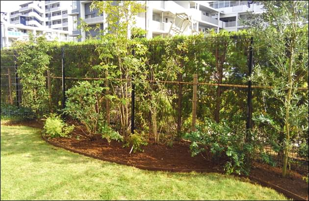 部分的に芝生を撤去して植栽エリアを設置
