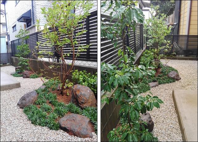 日陰の環境で育つミツバツツジとソヨゴ