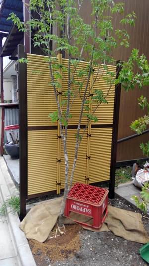 施工を終えた人工竹垣