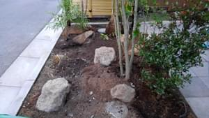 ヒメシャリンバイの植栽