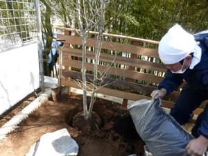 お庭の角を引き締めるアオハダ植栽
