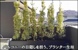 バルコニーに設置した目隠しのプランター生垣-三郷市I様邸