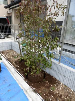 シンボルツリーの植栽