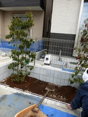 隣地境界側へソヨゴを植栽
