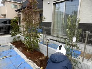 オリーブを植栽