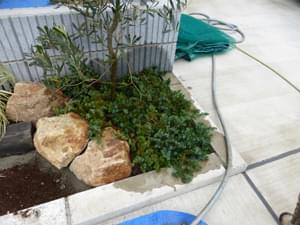 庭石に添えるグランドカバー