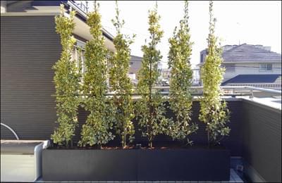 プランターならではのおしゃれな植木レイアウトも