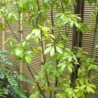 アラカシとは?目隠し用の庭木や生垣として活用してみよう