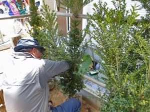 生垣用のキンメツゲを植栽