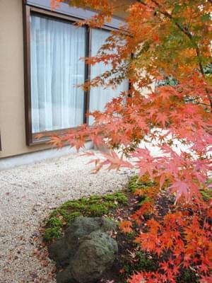 住宅の庭で楽しむイロハモミジの紅葉