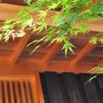 イロハモミジの特徴と魅力-樹形や成長傾向の解説、自然なシンボルツリーとしての実例もご紹介