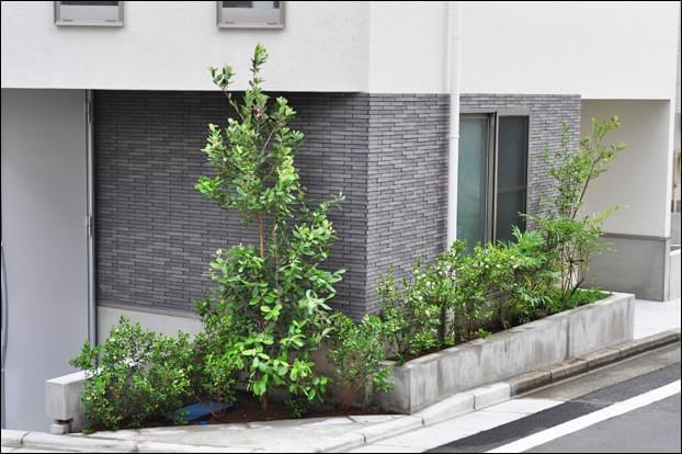 濃緑色の植栽で重厚感を感じる花壇