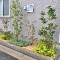 玄関周りや花壇におすすめな低木・グランドカバー