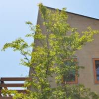シンボルツリーにおすすめな庭木14選