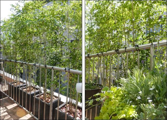 寄せ植えにも優しい、木漏れ日効果