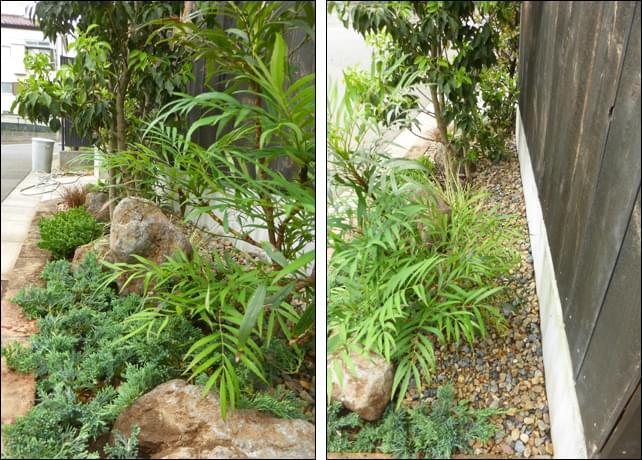 植え過ぎない、汚さない、をデザインする庭