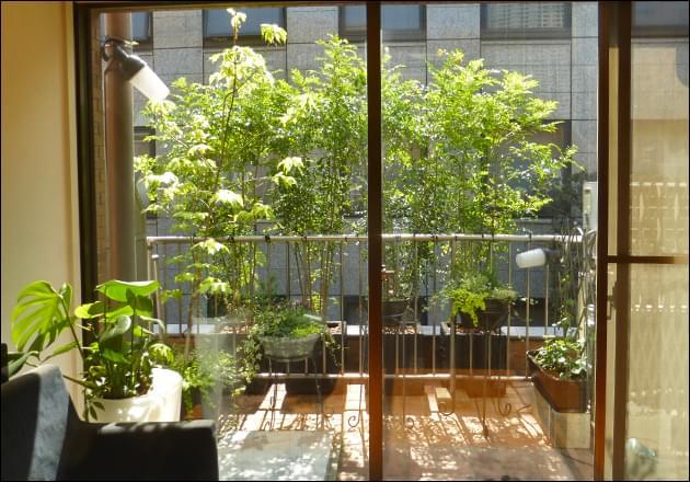 緑のカーテンを思わせる目隠し植栽
