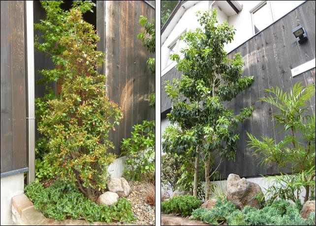 目隠しに、シンボルに、それぞれの役割を持つ植木