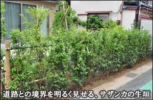 敷地をL字型に囲うサザンカの生垣-市川市M様邸