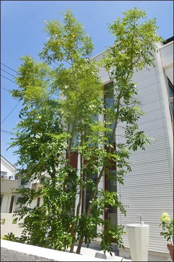 庭の中心へシンボルツリーを植栽