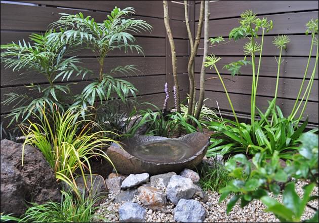 緑濃い日陰植物が育む水鉢周り
