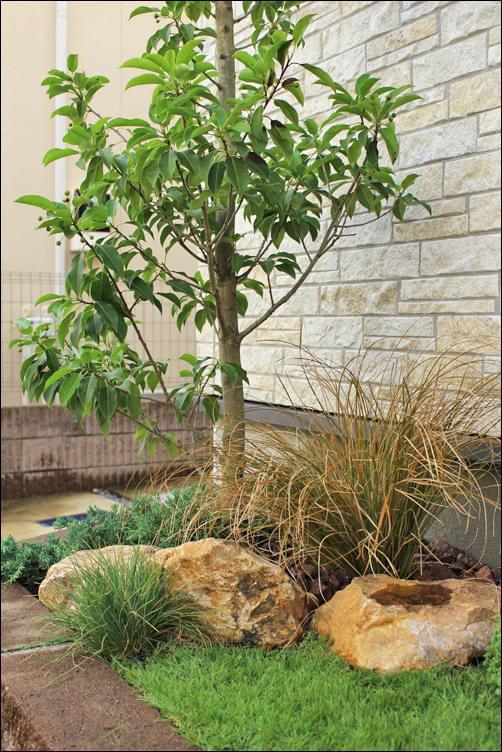 細葉の植栽がもたらす清涼感